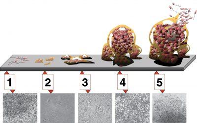 Biofilms: Què són i com es formen?