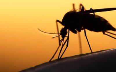 Eliminadores de insectos: ¿Cuál es el mejor para mi negocio?
