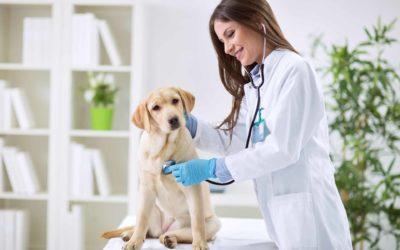 Guía de limpieza y desinfección en clínicas veterinarias