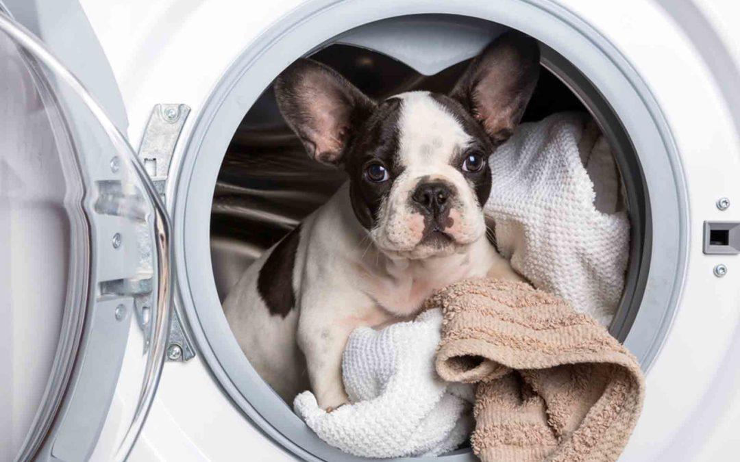 Higiene en presencia de mascotas: ¿Cómo debe ser?