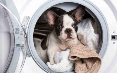 Higiene en presència de mascotes: Com ha de ser?