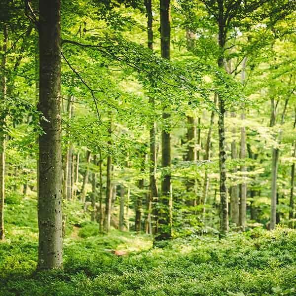papelmatic-higiene-professional-certificacions-mediambientals-reforestacio