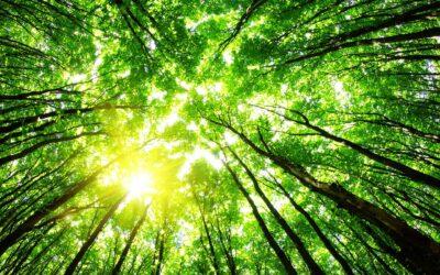 A Papelmatic respectem el medi ambient